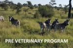 Pre Veterinary Program